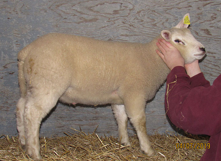 Wisconsin Wool Works | The Wisconsin Sheep Breeders Cooperative