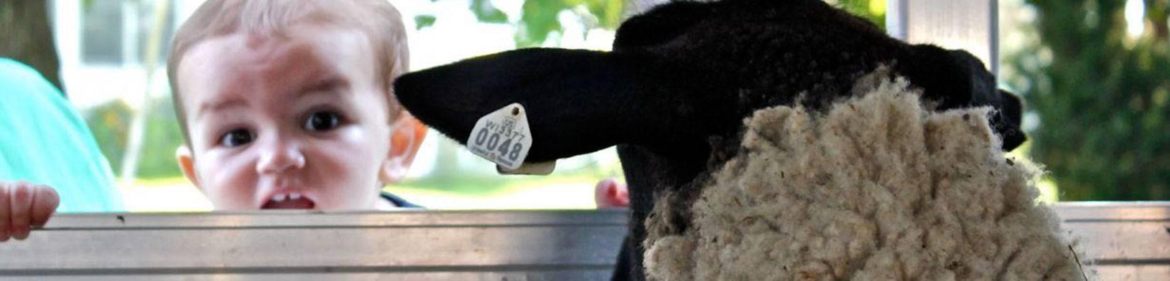Membership - Membership Directory | The Wisconsin Sheep Breeders